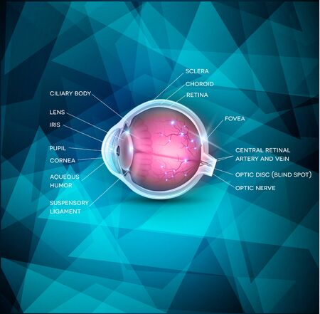 eye cross section: Anatomy of the healthy eye, detailed illustration