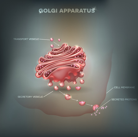 extracellular: Golgi apparatus abstract mesh background. Detailed illustration Illustration