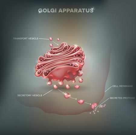 Golgi apparatus abstract mesh background. Detailed illustration Illustration