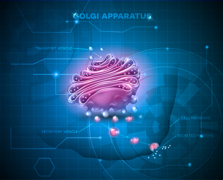extracellular: Golgi apparatus abstract technology background. Detailed illustration