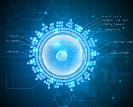 blastocyst: Ovum detailed drawing, beautiful design on a blue technology background