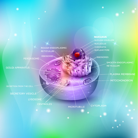 ribosomes: Anatomy of the cell cross section beautiful colorful illustration on a light blue abstract background Illustration