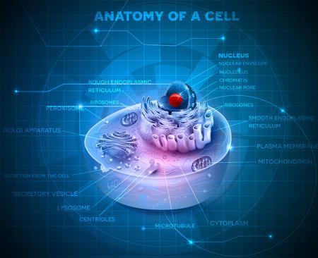 셀 해부학 단면 추상 파란색 기술 배경