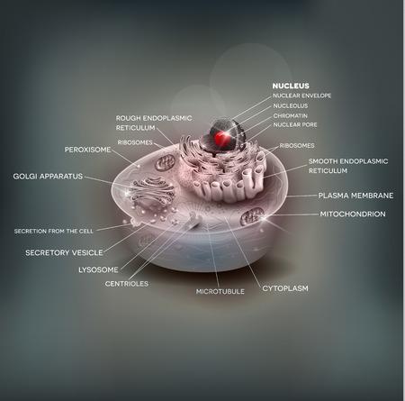 celula animal: anatomía celular fondo hermoso de malla, ilustración médica con la descripción