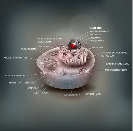 ribosomes: Cell anatomy beautiful mesh background, medical illustration with description Illustration