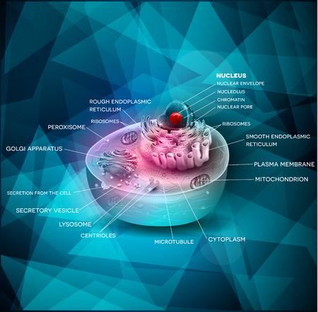 celula animal: estructura celular hermoso diseño abstracto, la sección transversal de la celda se detalla la anatomía de colores en un triángulo azul forma el fondo Vectores