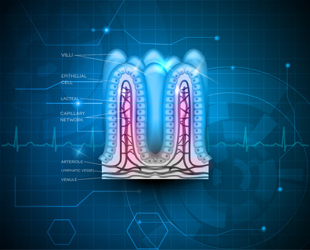 bowel wall: Intestinal villi anatomy on a abstract technology background