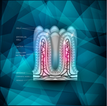 bowel wall: Intestinal villi anatomy on abstract triangle background Illustration