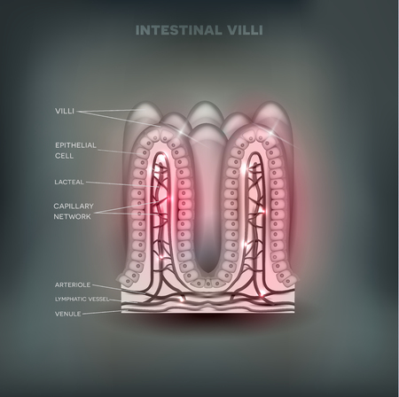 bowel wall: Intestinal villi anatomy on  abstract background