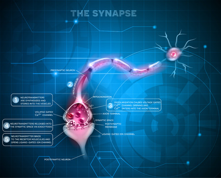 Synapse detailed anatomy, abstract technology background. Neuron passes signal to another neuron. 版權商用圖片 - 54018268