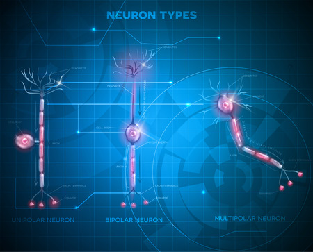 main part: Neuron types, nerve cells that is the main part of the nervous system. Abstract blue technology background
