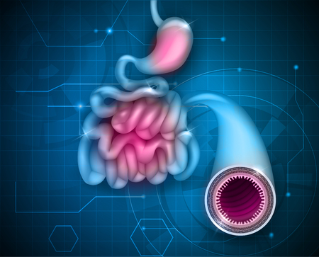 Small intestine and stomach on an abstract blue background Illustration