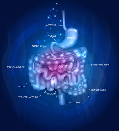 bowels: Gastrointestinal tract. Stomach, small intestine and colon, abstract blue artistic background with lights. Beautiful bright illustration.