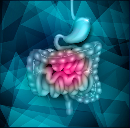 Gastrointestinal tract. Stomach, small intestine and colon. Beautiful bright illustration.