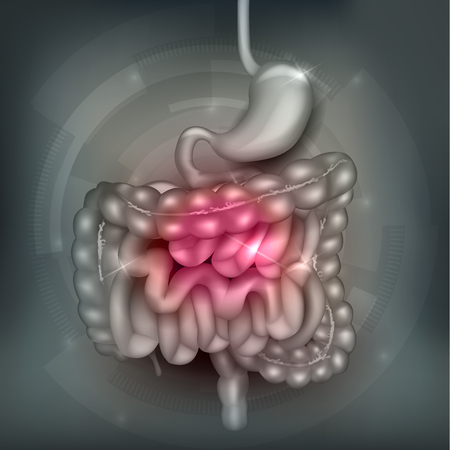 Gastrointestinal tract. Stomach, small intestine and colon, abstract grey mesh background. Beautiful bright illustration.