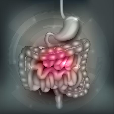 intestino: Tracto gastrointestinal. Estómago, intestino delgado y colon, resumen de antecedentes de malla gris. ilustración brillante hermoso.