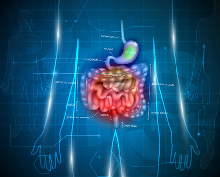 Gastrointestinal tract. Stomach, small intestine and colon, abstract blue technology background with lights and human silhouette.