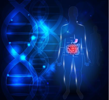 Magen-Darm-Trakt abstrakten wissenschaftlichen Hintergrund mit DNA-Kette