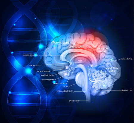Human brain abstract scientific design with DNA chain, beautiful bright deep blue color Stock Illustratie