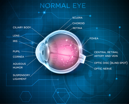 eye cross section: Eye anatomy on a blue technology background