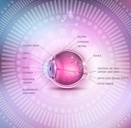 eye cross section: Normal eye anatomy on a beautiful colorful mesh background