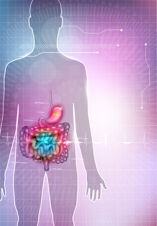 bowels: Gastrointestinal tract anatomy abstract colorful mesh background. Stomach, small intestine and colon detailed anatomy