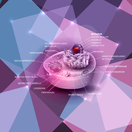 ribosomes: Cell structure, cross section of the cell detailed colorful anatomy on a beautiful abstract shapes background