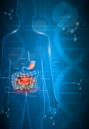 Gastrointestinal tract anatomy on a abstract dark blue scientific background with DNA chain Stock Illustratie