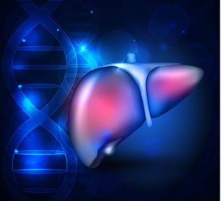 Anatomía del hígado resumen de antecedentes científicos azul con la cadena de ADN Ilustración de vector