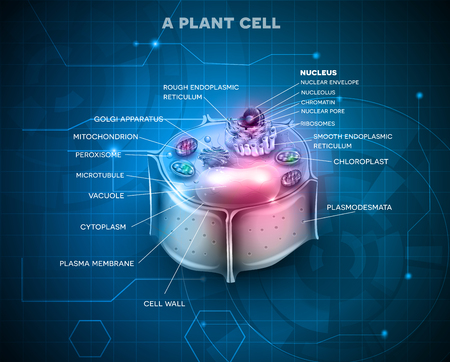 organelles: Plant Cell anatomy scientific background