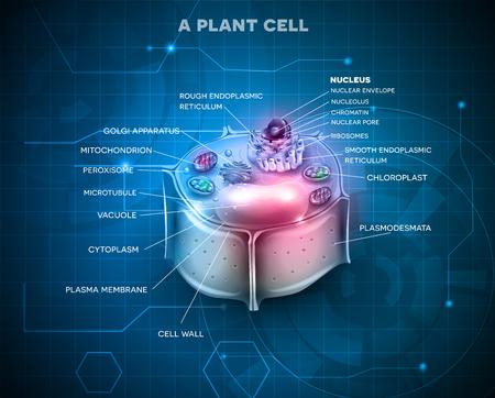 golgi: Plant Cell anatomy scientific background