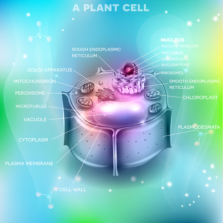 Plant Cell on an beautiful abstract light blue background
