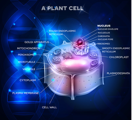 organelles: Plant Cell structure and DNA chain at the background