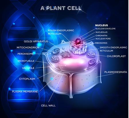 Structure de la cellule de la plante et de la chaîne d'ADN à l'arrière-plan Vecteurs