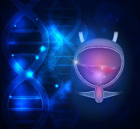 Urinary bladder DNA scientific abstract background