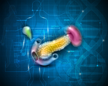 common bile duct: Pancreas anatomy illustration on an abstract scientific technology background