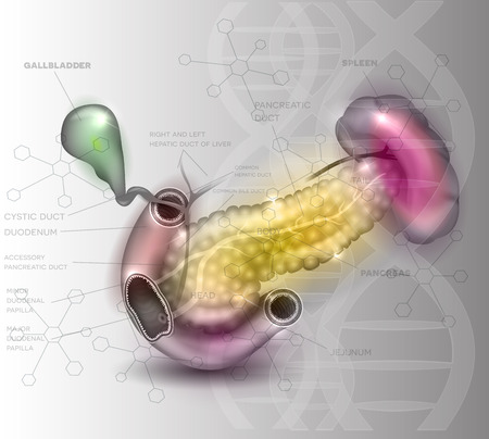 glandular: Pancreas anatomy illustration on an abstract light grey scientific background with DNA chain and molecules