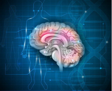 brain research: Human Brain research abstract scientific background with DNA chain and human silhouette