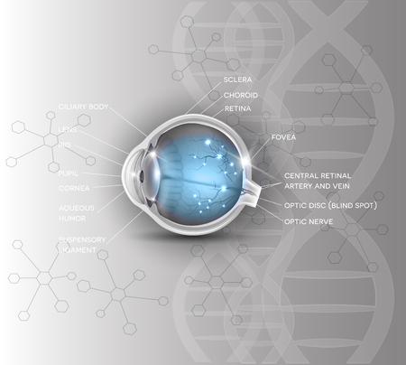 eye cross section: Normal eye anatomy scientific DNA background Illustration