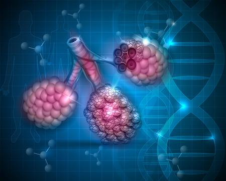 alveolos: Alvéolos Anatomía almuerzo en un fondo azul resumen científica