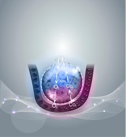 alveolos: Alvéolos mecanismo de la respiración, el oxígeno y el dióxido de carbono intercambio primer entre alvéolos y los capilares. Resumen de fondo gris. Vectores