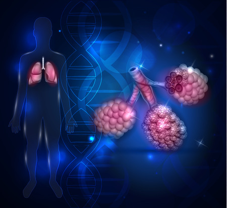 alveolos: Los alvéolos anatomía, oxígeno y dióxido de carbono intercambio entre los alvéolos y los capilares, el mecanismo de respiración externa. Vectores
