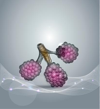 alveolos: Alvéolos anatomy- espacios aéreos en los pulmones a través de los que las bolsas de oxígeno y dióxido de carbono. Resumen de fondo gris