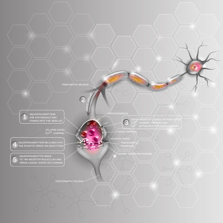 Synapse detailed anatomy, beautiful colorful illustration. Neuron passes signal to another neuron. Abstract scientific background. Illustration