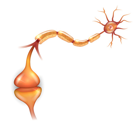 synaptic: Neuron passes signal to another neuron. Illustration
