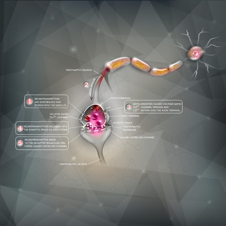 synapse: Synapse detailed anatomy, beautiful colorful illustration. Neuron passes signal to another neuron. Illustration