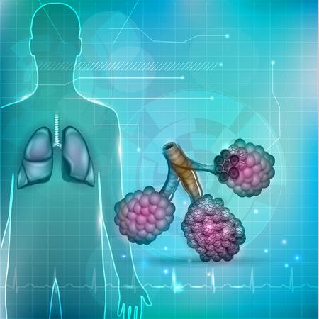 alveolos: Alvéolos una parte del sistema respiratorio. Silueta humana, los pulmones y el electrocardiograma normal en el fondo. Vectores