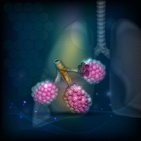 alveolos: Alvéolos una parte del sistema respiratorio. silueta de pulmón en el fondo.