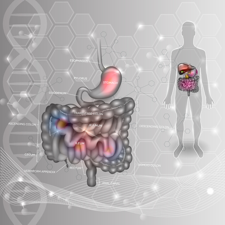 Digestive system abstract scientific background. Stomach, small and large intestine, human silhouette on an abstract DNA scientific background