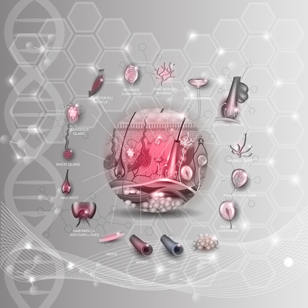 receptors: Skin anatomy structure in the round shape detailed anatomy illustration, abstract DNA scientific background